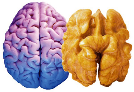 для мозга